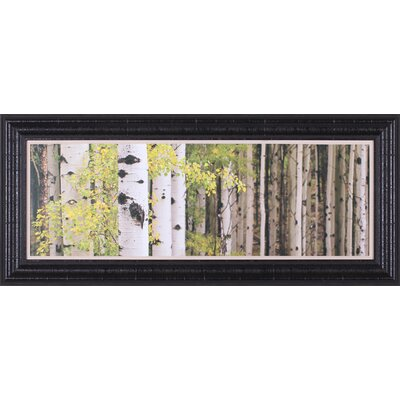 Forest Standing by Heather Ross Framed Photographic Print