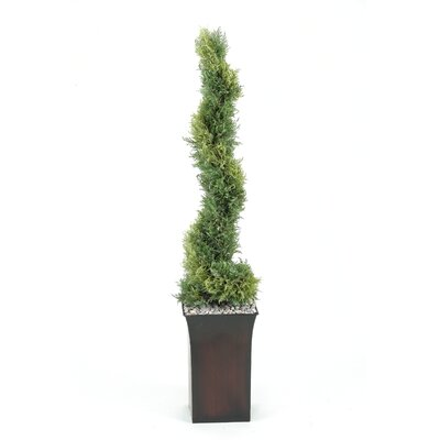 Spiral Cedar Topiary in Square Planter