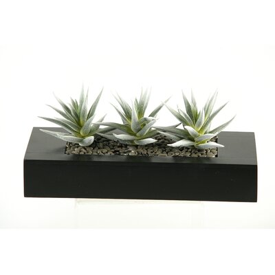 D & W Silks Flocked Aloe Succulents Wooden Planter