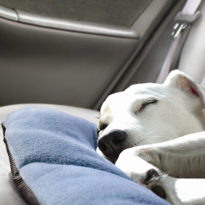 WanderBed Travel Dog Mat