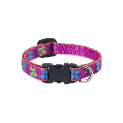 "Lupine Pet Wing It 1/2"" Adjustable Small Dog Collar"