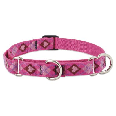 Lupine Pet Puppy Love Adjustable Large Dog Combo Collar