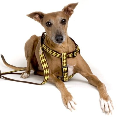 Lola and Foxy Jester Dog Harness