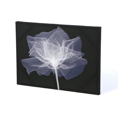 Graham & Brown X-Ray Flower Printed Graphic Art on Canvas