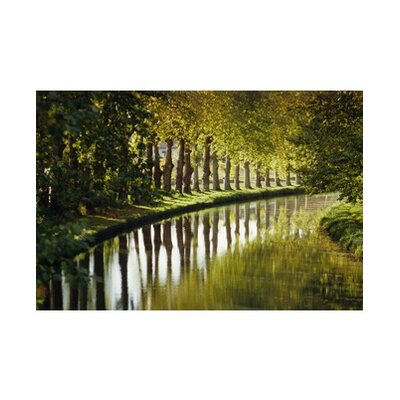 Graham & Brown Tree Walk Canvas