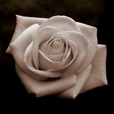 Graham and Brown Vintage Rose Photographic Print on Canvas