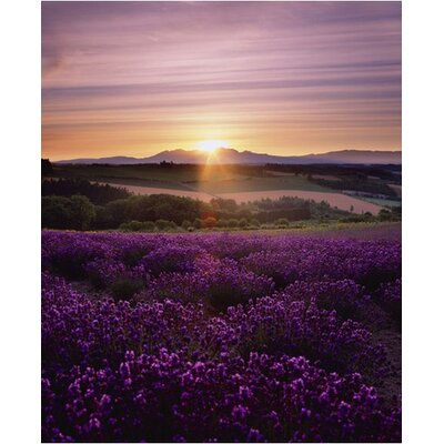 Graham & Brown Graham and Brown Lavendar Sunset Photographic Print on Canvas