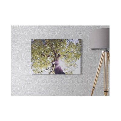 Graham & Brown Through The Trees Canvas
