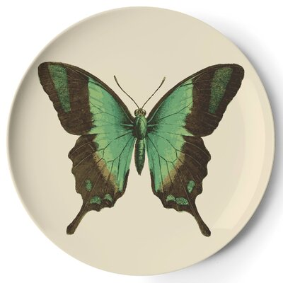 Thomas Paul Metamorphosis Coaster