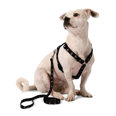 Aspen Pets Adjustable Reflective Dog Collar