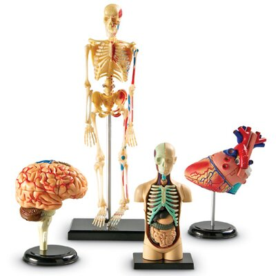 Learning Resources Anatomy Models Bundle 132 Piece Set