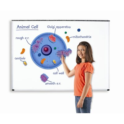 Learning Resources Giant Magnetic Animal Cell