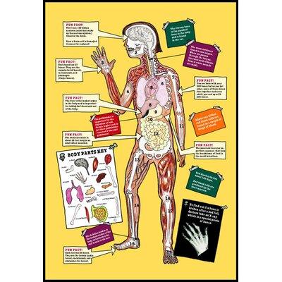 Magic school bus anatomy
