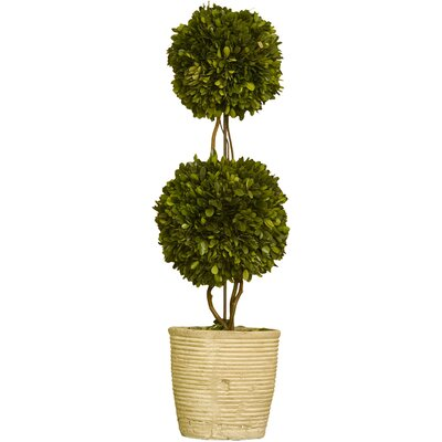 Napa Home and Garden Preserved Boxwoods Double Sphere Topiary in Pot