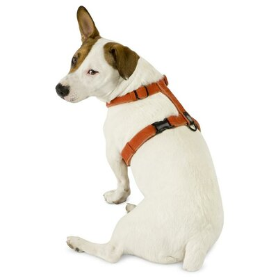 Planet Dog Cozy Hemp Adjustable Dog Harness