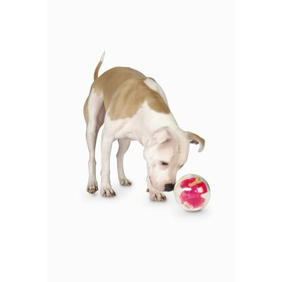 Planet Dog Orbee Tuff Mazee Dog Toy