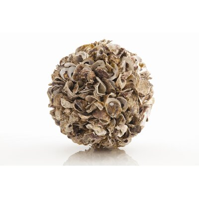 ARTERIORS Home Kosta Authentic Oyster Shell Sphere in Natural