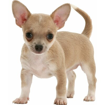 4 Walls Puppy Love Chihuahua Wall Decal