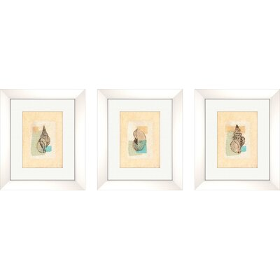 Pro Tour Memorabilia Coastal Shell Framed Art