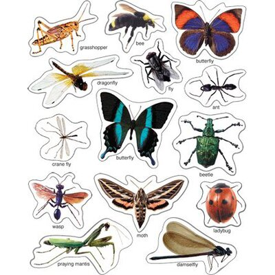 Frank Schaffer Publications/Carson Dellosa Publications Insects Photographic