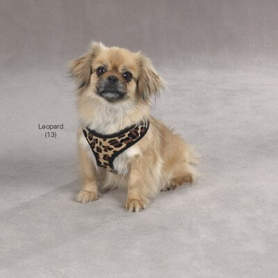 East Side Collection Plush Print Dog Harness