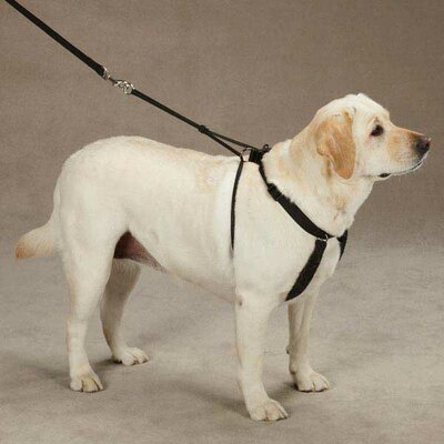 East Side Collection Anti Pull Harness