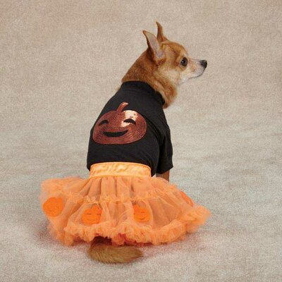 Zack and Zoey Pumpkin Dog Costume Set