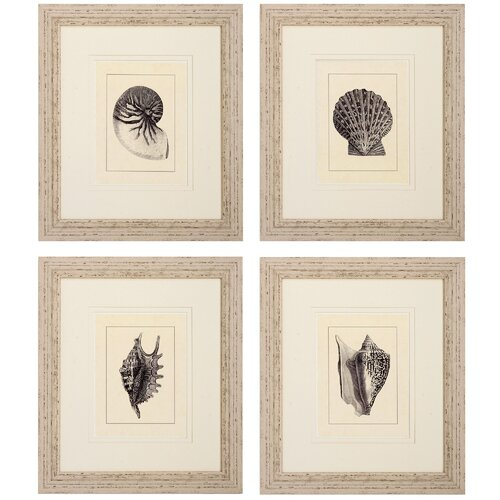 Shell 4 Piece Framed Graphic Art Set