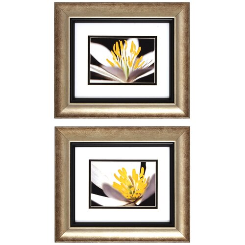 Propac Images White Poccoon I / II 2 Piece Framed Graphic Art Set