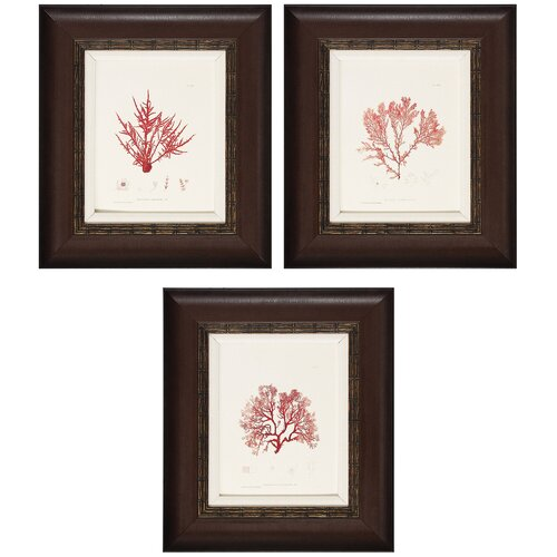 Nature II/III/IV 3 Piece Framed Graphic Art (Set of 3)