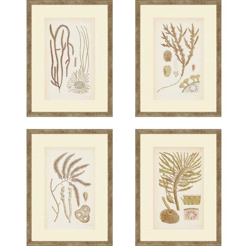 Sea II by Ziffer 4 Piece Framed Graphic Art Set