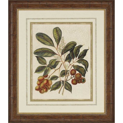 Foliage and Fruit I Framed Painting Print