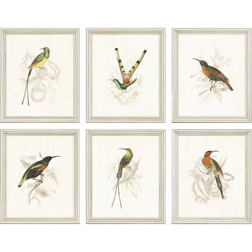 Hummingbirds by Jardine 6 Piece Framed Painting Print Set