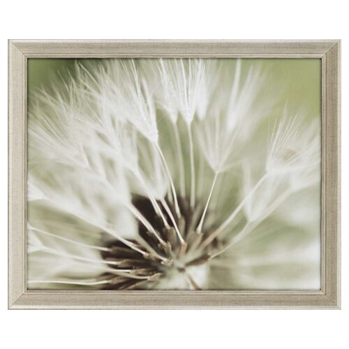 Paragon Dandelion I by Miller Framed Photographic Print