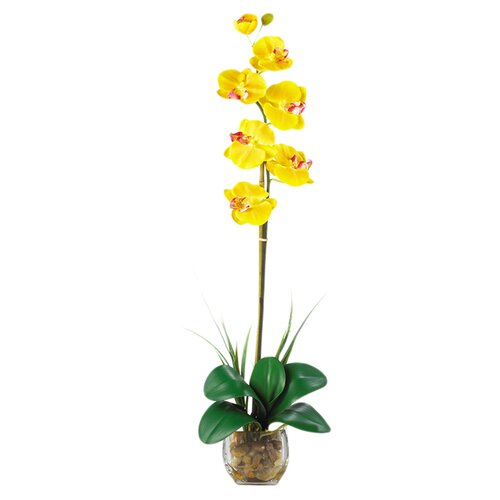 Liquid Illusion Single Phalaenopsis Silk Orchid Arrangement in Yellow