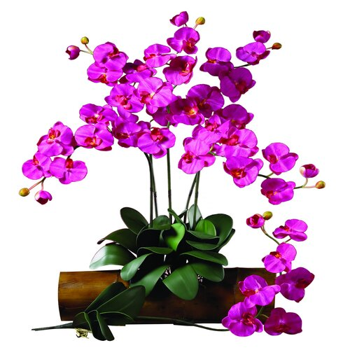 Nearly Natural Phalaenopsis Stem in Beauty