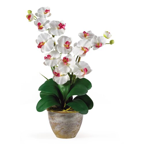 Nearly Natural Double Phalaenopsis Silk Orchid Arrangement in White