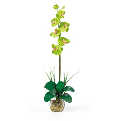 Liquid Illusion Single Phalaenopsis Silk Orchid Arrangement in Green