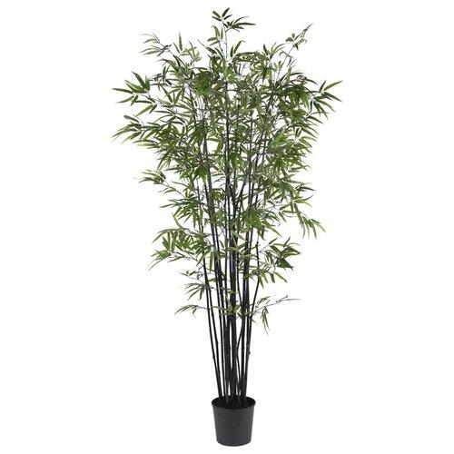 Bamboo Tree in Pot