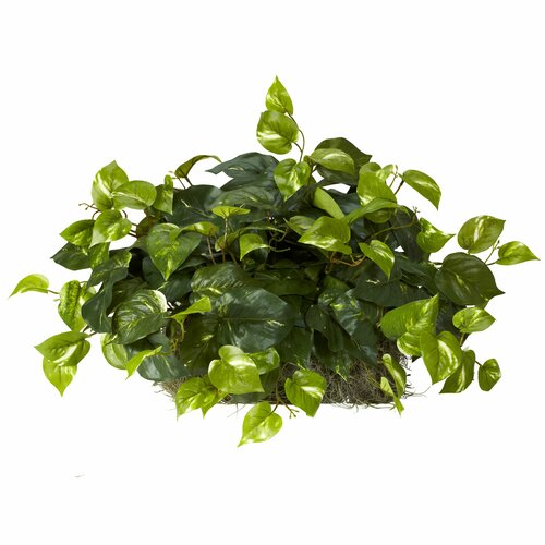 Nearly Natural Pothos Ledge Desk Top Plant in Planter