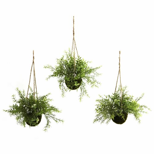 Ruscus, Sedum and Springeri Hanging Plant in Basket (Set of 3)