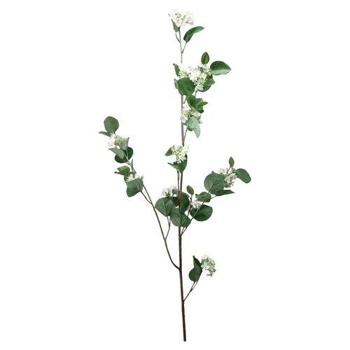 Barreveld International Hydrangea Stem