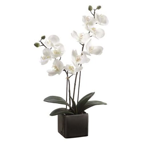 Tori Home Phalaenopsis Orchid Plant in Cream Pot