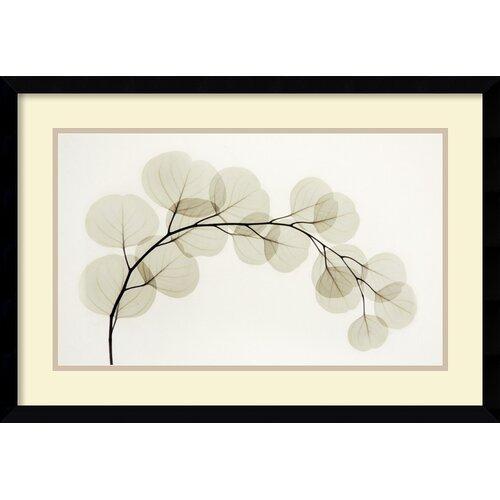 'Eucalyptus II' by Albert Koetsier Framed Photographic Print