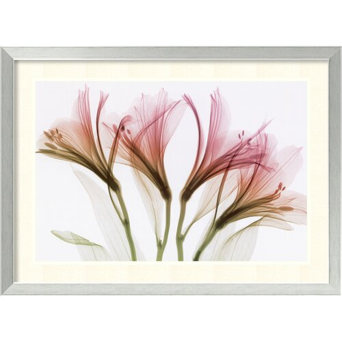 Amanti Art 'Alstromeria' by Steven N. Meyers Framed Photographic Print
