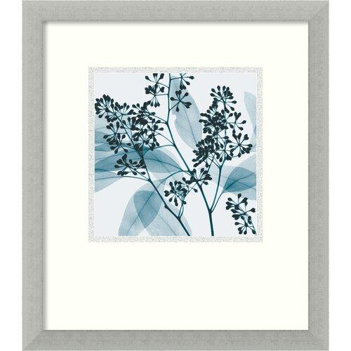 Amanti Art 'Eucalyptus II' by Steven N. Meyers Framed Photographic Print