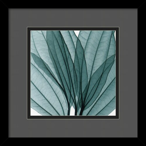 Amanti Art 'Leaf Bouquet' by Steven N. Meyers Framed Photographic Print
