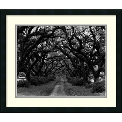 Amanti Art 'Path in The Oaks No. 2, Louisiana' by Monte Nagler Framed Photographic Print