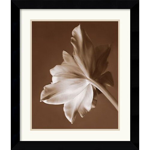 'Moonglow Tulip' by Rebecca Swanson Framed Photographic Print