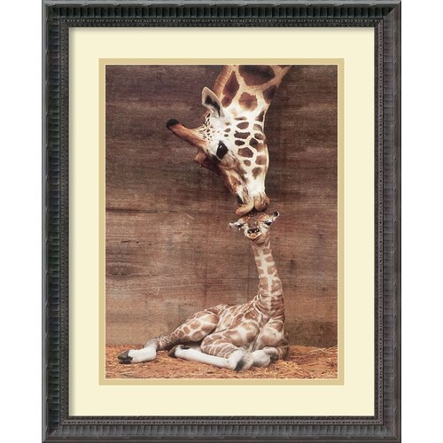 Amanti Art 'Makulu - Giraffe First Kiss' by Ron D'Raine Framed Photographic Print